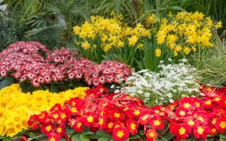 Geranien- und Blumenmarkt