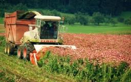 Anbau Naturheilkräuter