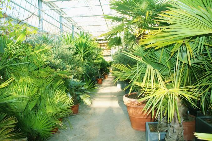Kübelpflanzen - Wir überwintern Ihre Lieblingspflanzen